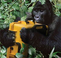 a gorilla in the jungle holding a Peli Storm case in yellow